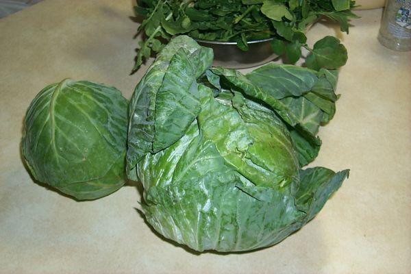 cabbage-w.jpg