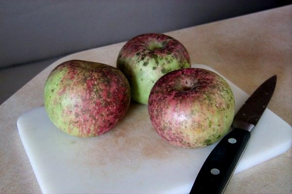 araw-apples.JPG