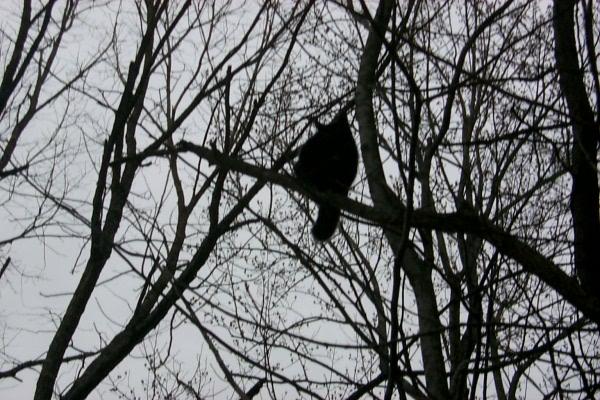 s-treed-2009-03-13-2.JPG