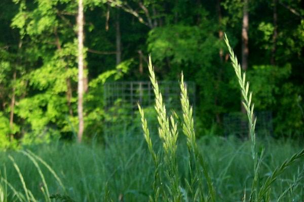 d-grass-2009-05-04-1.JPG