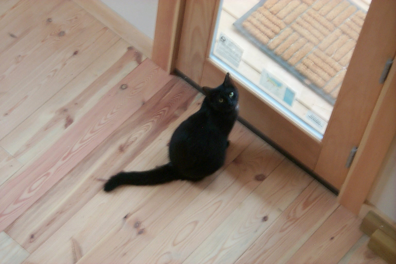 lily-at-the-door-1.JPG