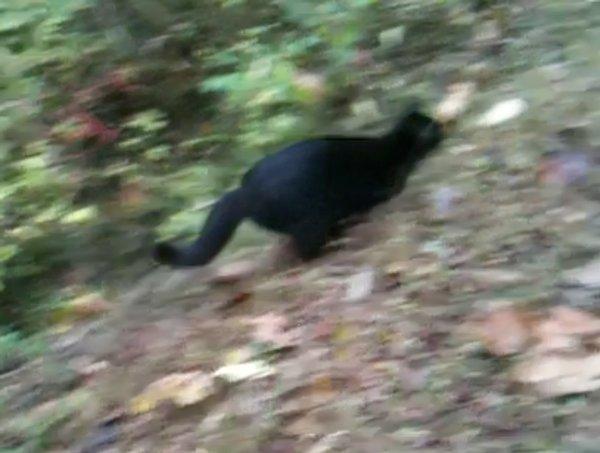 l-cat-patrol-5.jpg