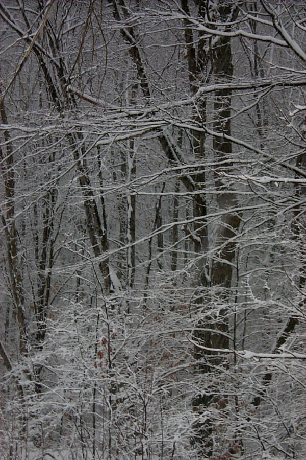 a-snow-2010-02-05-1.JPG