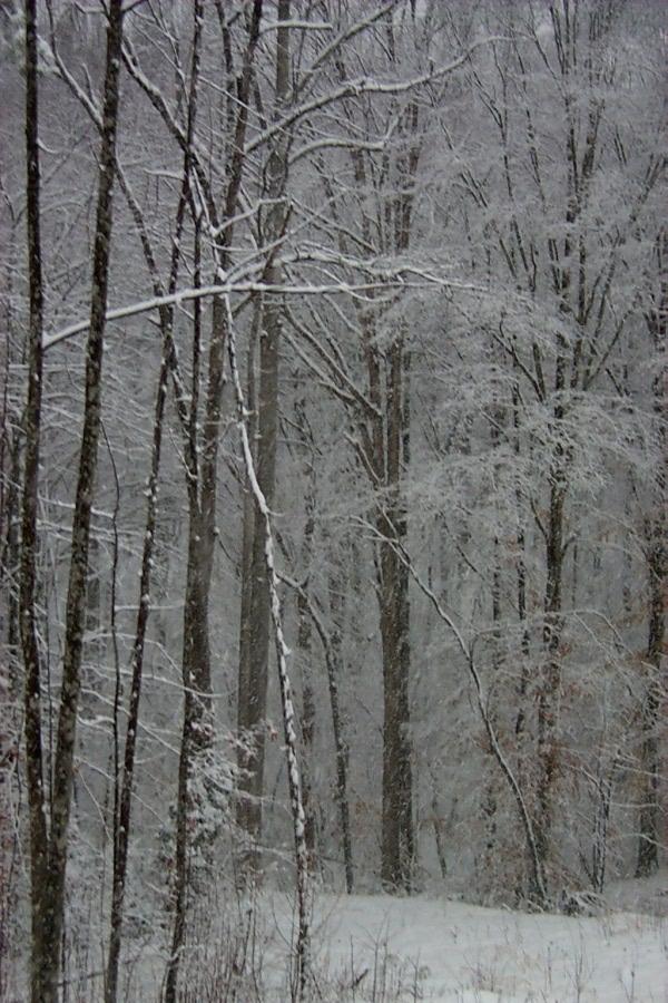 a-snow-2010-02-05-2.JPG