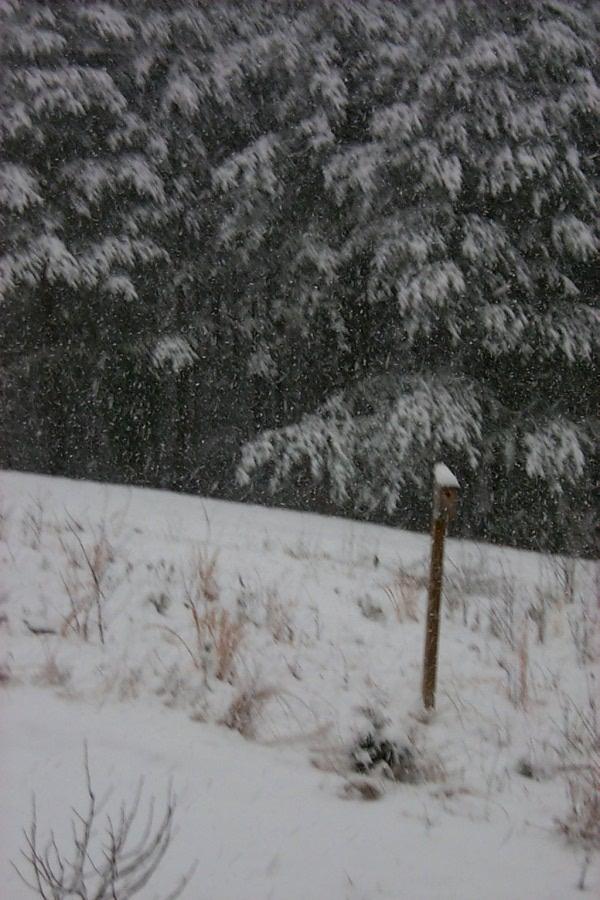 a-snow-2010-02-05-3.JPG