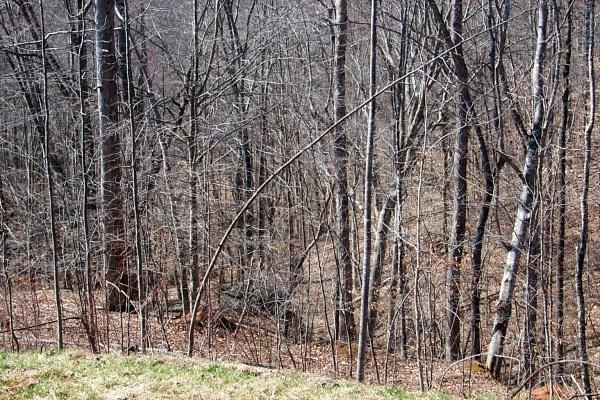 a-woods-2010-03-20-1.JPG