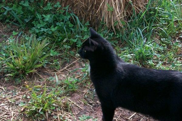 cat-world-5.JPG