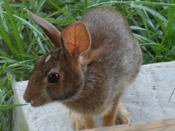 bunny-2.JPG
