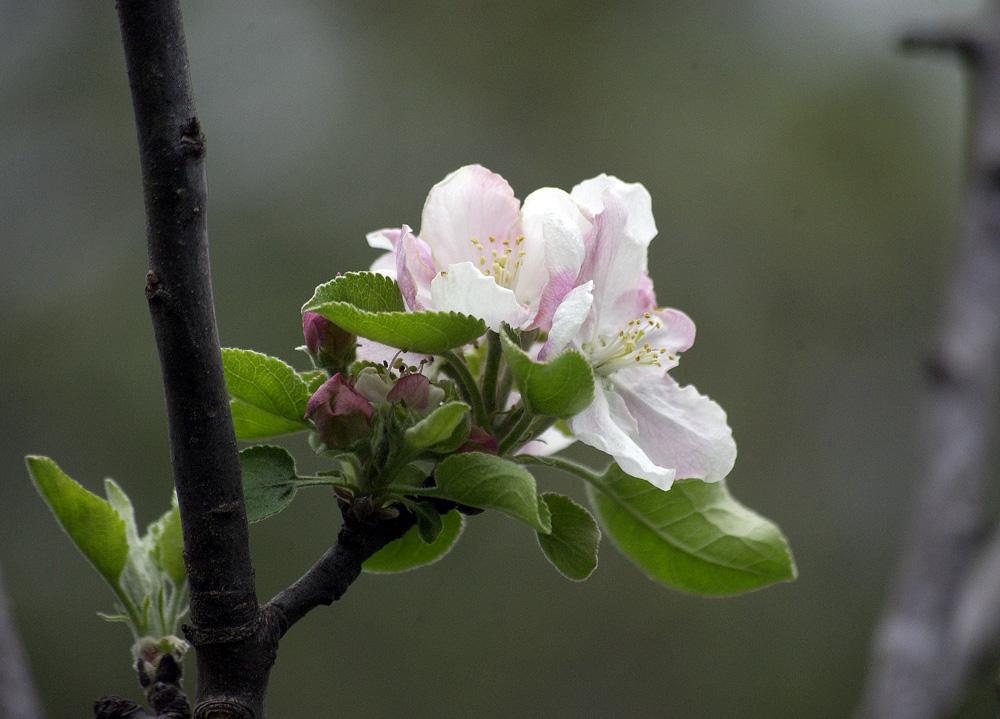 bloom-6
