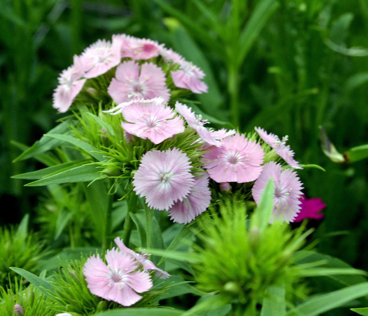 bloom-12