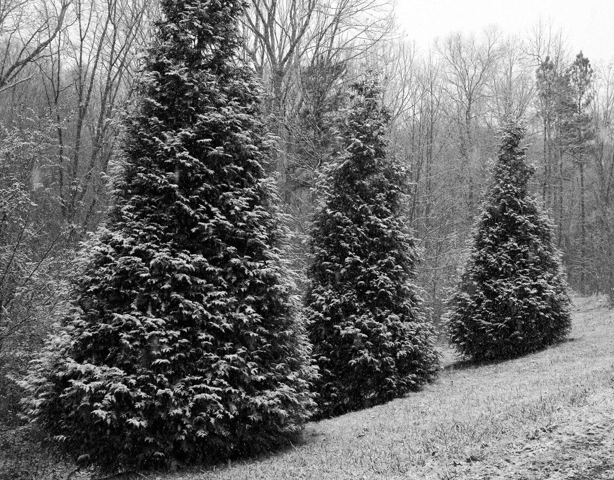 T-three-trees