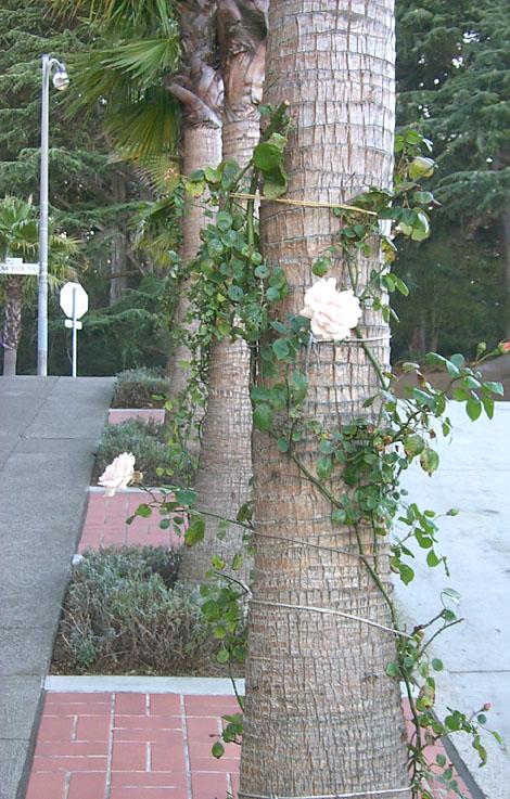 roses-on-treesw.jpg