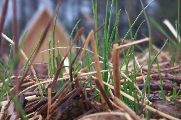 grass2-w.jpg