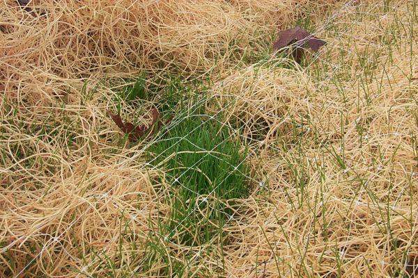 grass3-w.jpg