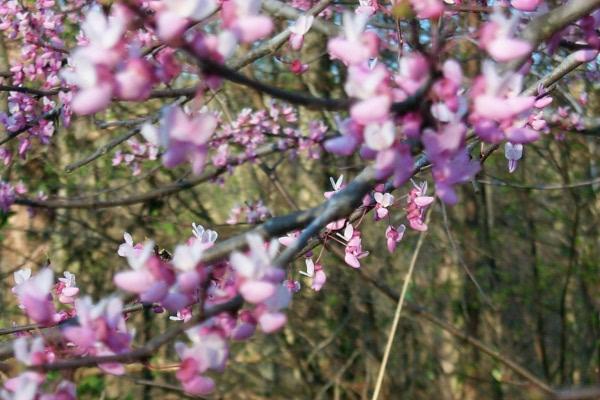 wpink-flowers.JPG