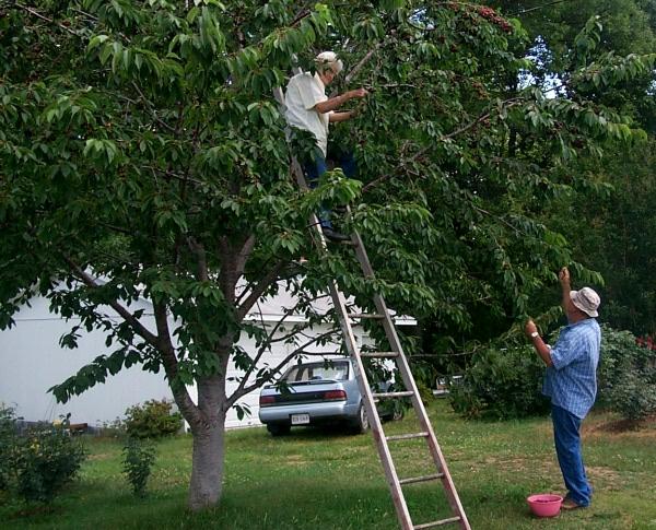 w11-tree-623.JPG