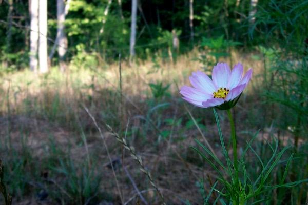 wmystery-flower-7-15.JPG