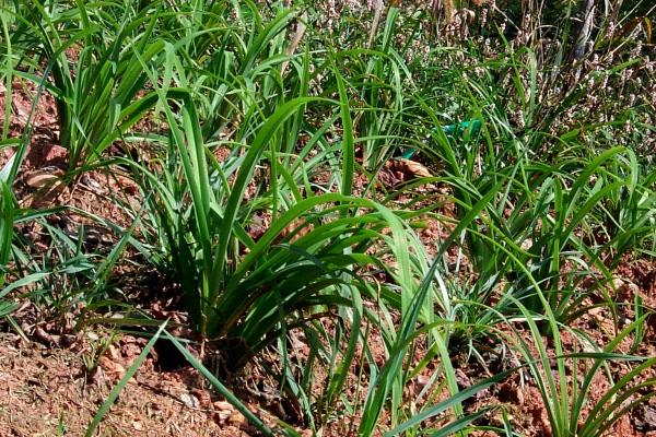 aday-lilies-9-29.JPG