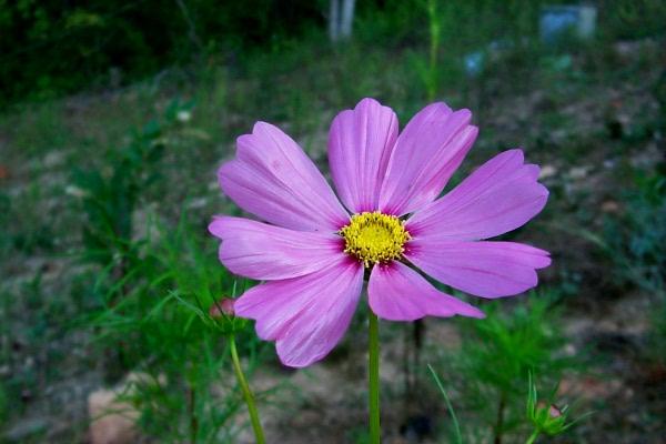 awildflowers-9-3-2.JPG