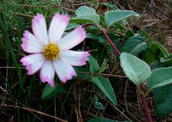 awildflowers-9-3-3.JPG