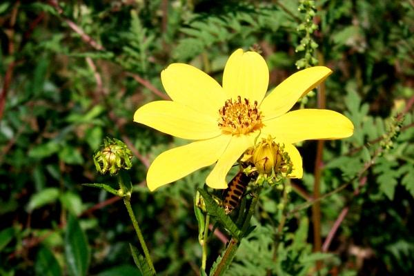 awildflowers-9-3-5.JPG