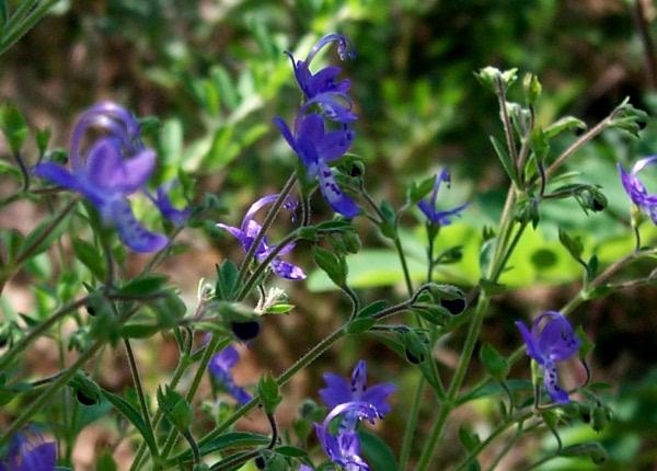 awildflowers-9-3-6.JPG
