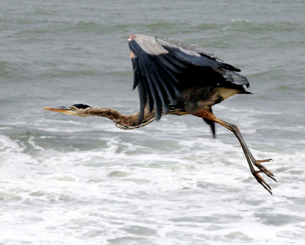 blue-heron-scaled.jpg