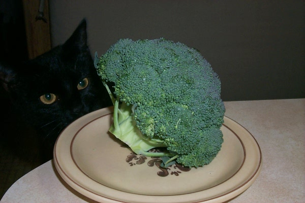 s-broccoli-with-witch.JPG