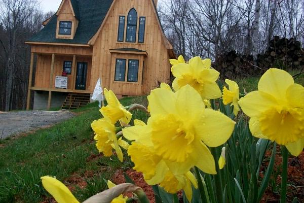daffodils-2009-03-25-1.JPG