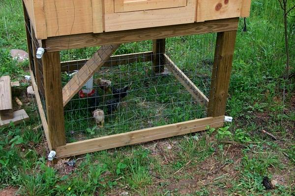 c-chickens-2009-05-03-1.JPG