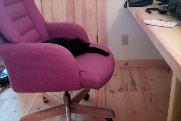 s-computer-chair-lily-4.JPG