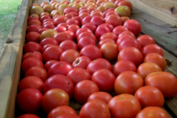 into the woods › homegrown tomatoes on the honor system, Natural flower