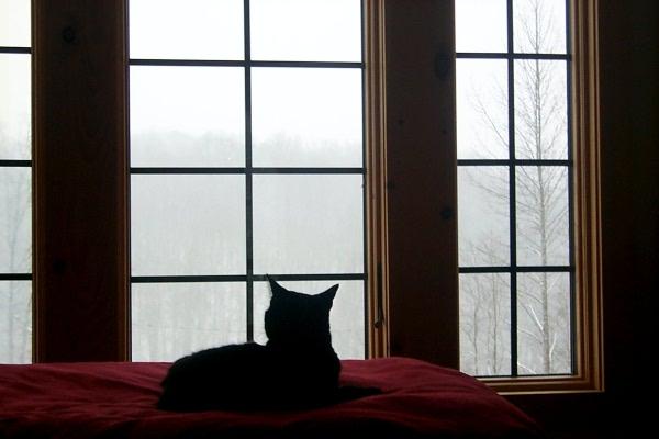 aa-snowy-day-3.JPG