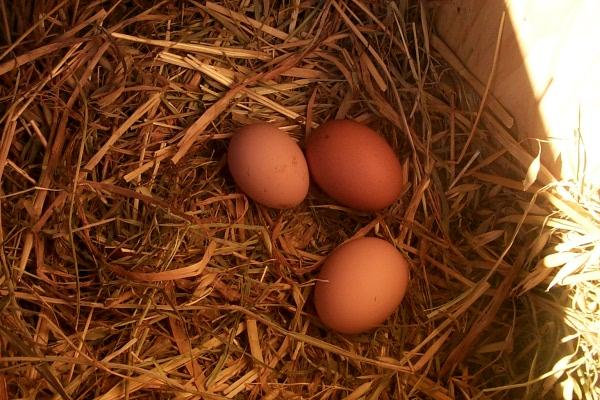 s-eggs-2009-12-16-2.JPG