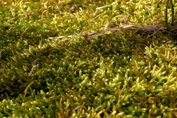c-green-in-the-woods-1.JPG