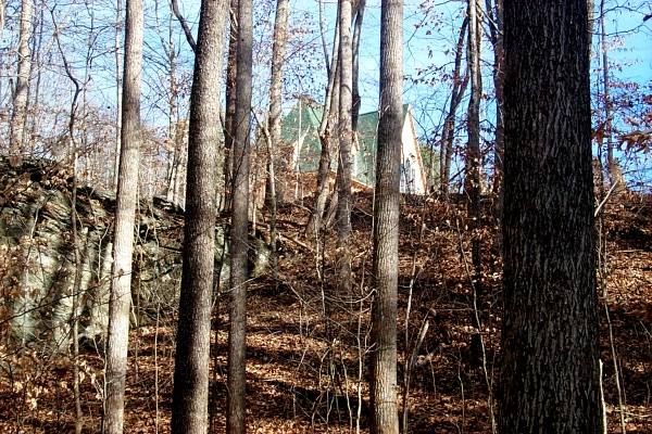 c-green-in-the-woods-12.JPG