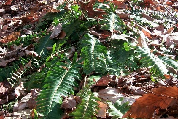 c-green-in-the-woods-4.JPG