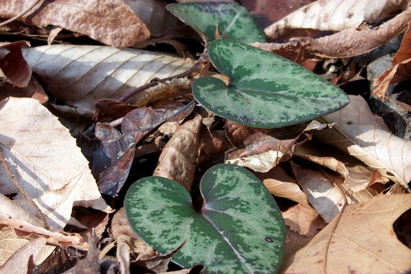 c-green-in-the-woods-7.JPG