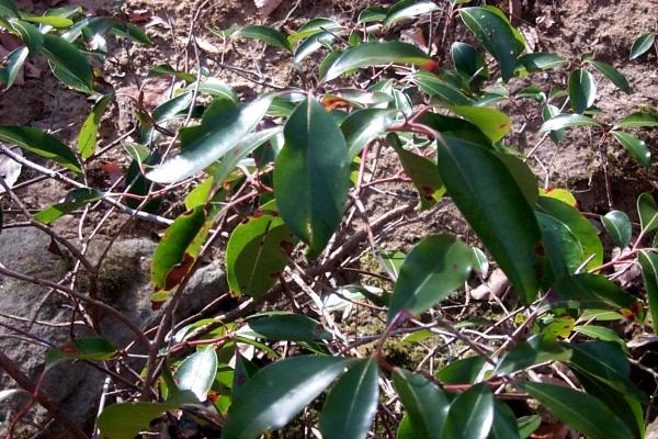 c-green-in-the-woods-8.JPG