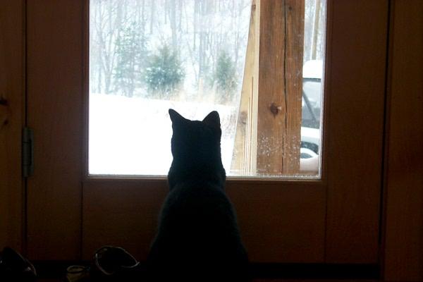 l-snow-day-0002.JPG