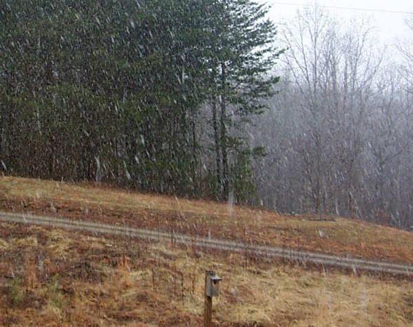 a-snow-2010-02-24-1.JPG