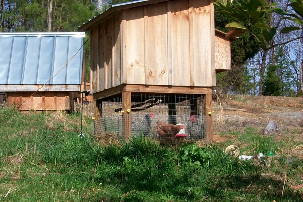 a-chickens-2010-03-27-1.JPG