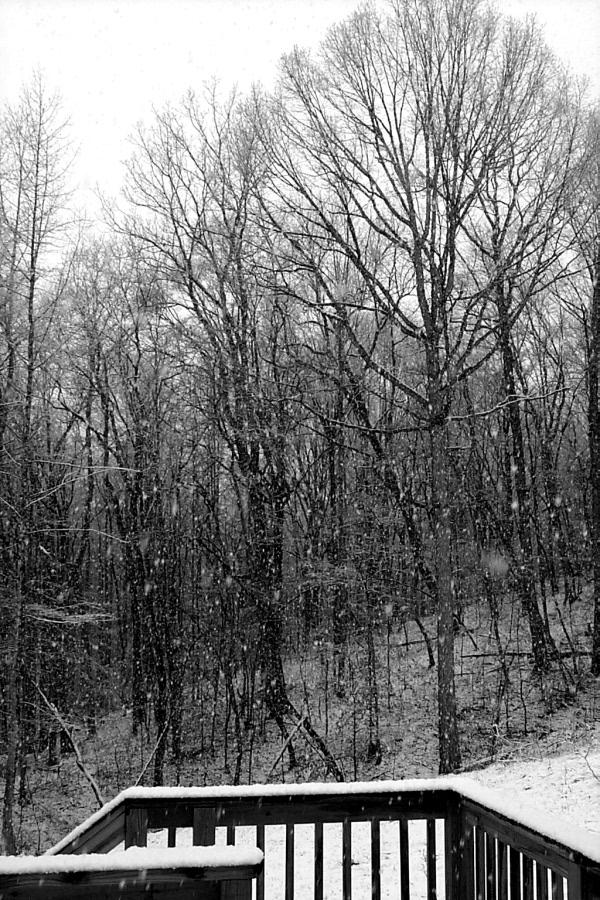 c-snow-2010-03-01-2.JPG
