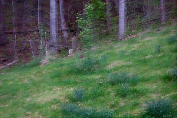 a-groundhog-2010-04-14-1.JPG
