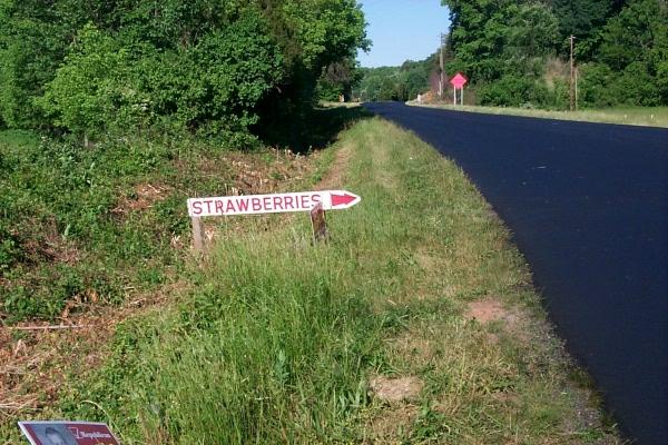 a-strawberries-2010-05-1.JPG