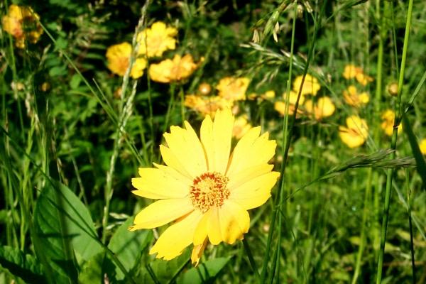blooming-2010-05-20-1.JPG