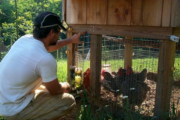 chicken-freedom-day-2.JPG