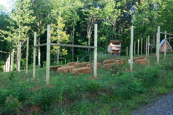fence-posts-2010-05-20-1.JPG
