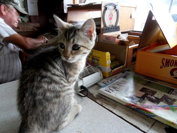 mill-kitten.JPG