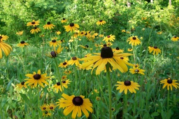 blooming-2010-06-14-3.JPG